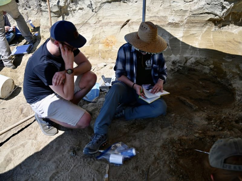 digging and cataloguing fossils